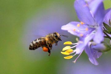 Виды мёда и особенности