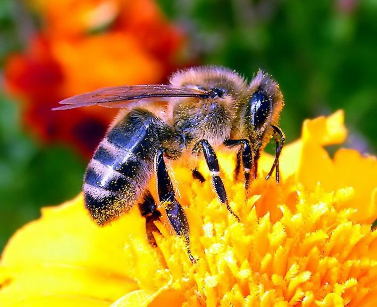 Виды цветочного мёда