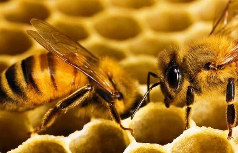 Свойства пчелиного воска