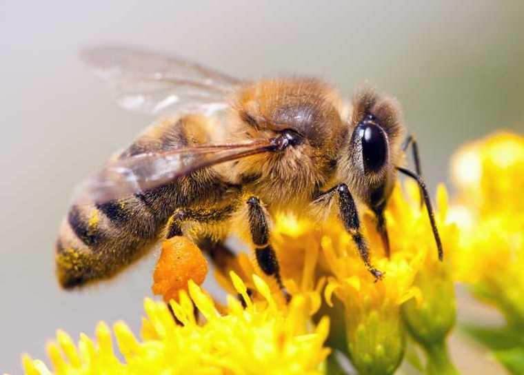 Как образуется мед