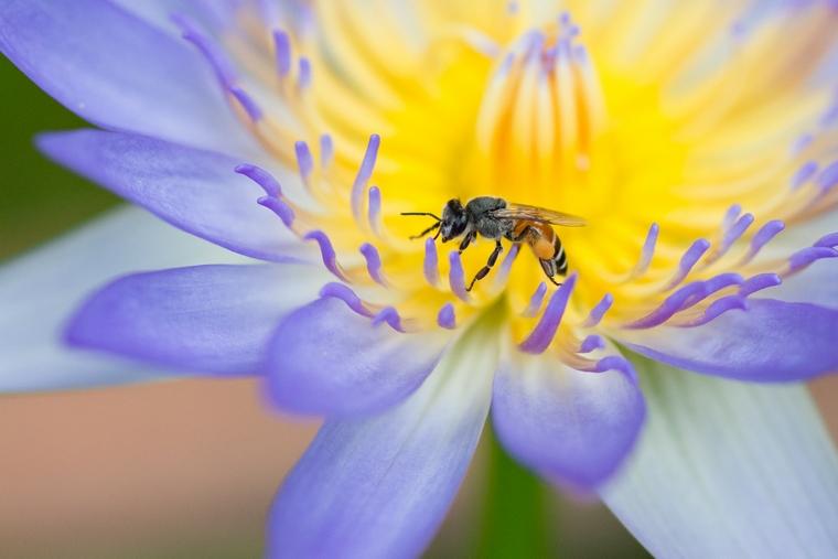 Пчела на цветке: красивые фото
